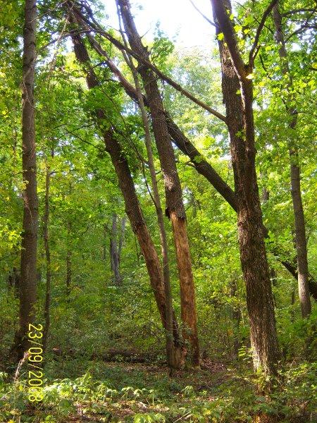 westlicher Wald